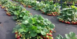 Технология «Спанбонд» или как появилось агроволокно